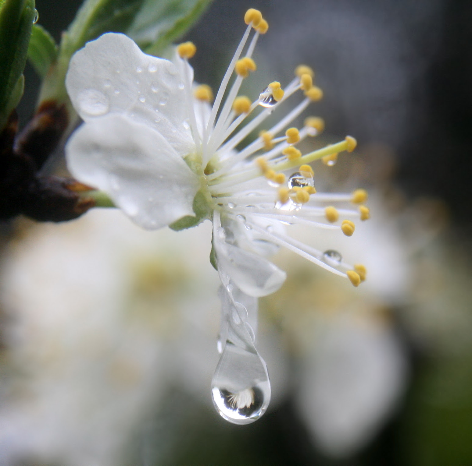 http://upload.wikimedia.org/wikipedia/commons/a/a0/A_flower_refracted_in_rain_droplets.jpg