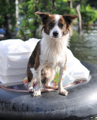 Photo: Dog on a float