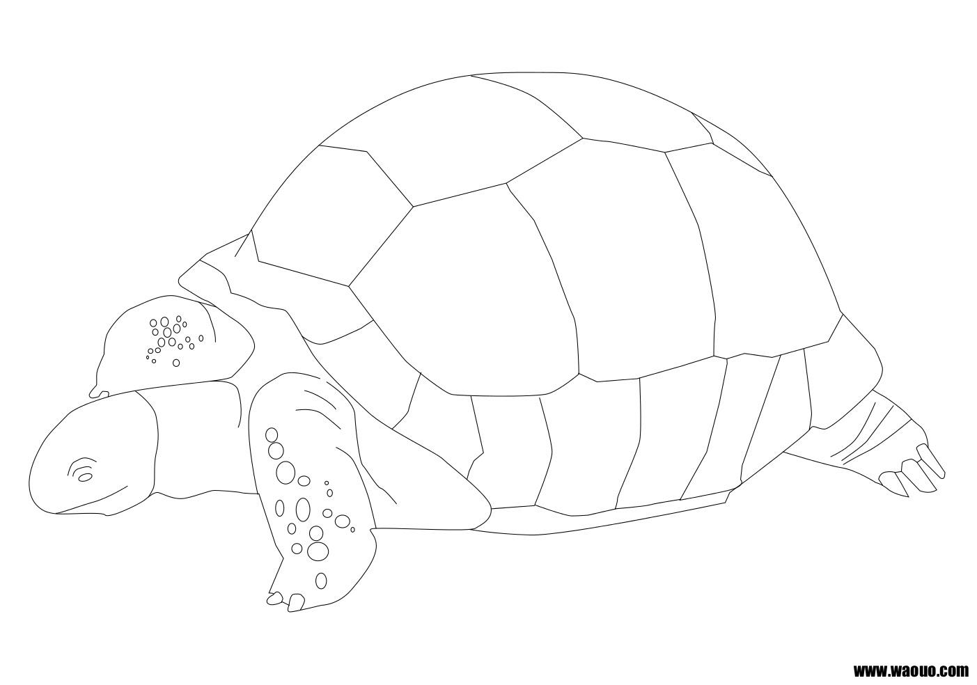 Coloriage de tortue gratuit a imprimer