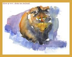 EDM # 44= draw an animal