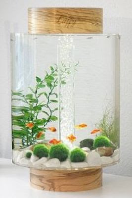 ​Marimo is a very popular plant in Japan. The Japanese believe that the Marimo will bring good luck.
