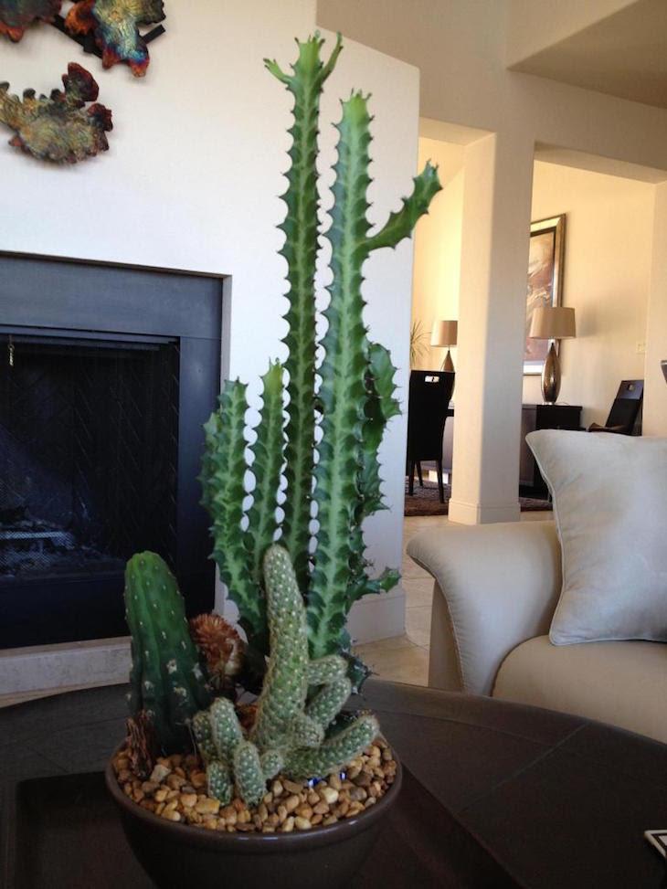 TOP 10 Beautiful Cactus Gardens for the Black Thumb - Top ...