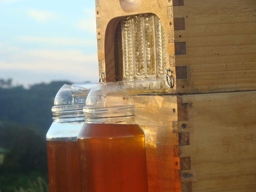 nueva-colmena-apicultura-miel-grifo-stuart-cedar-anderson (1)