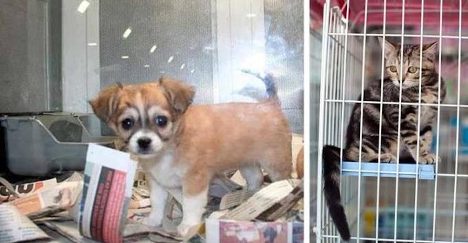 Reino Unido prohíbe la venta de cachorros de perros y gatos en las tiendas de mascotas