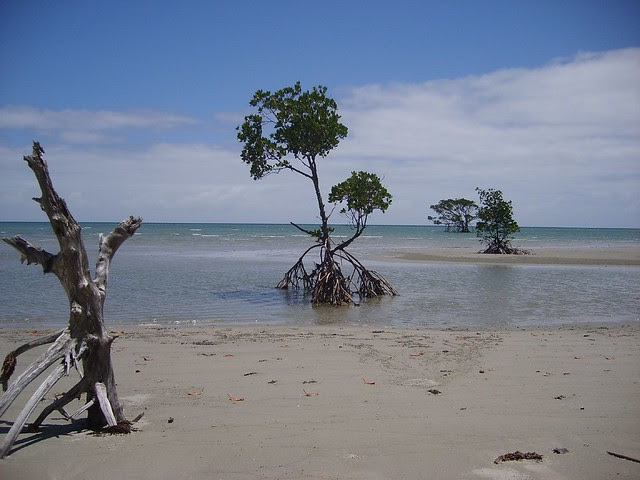 Random beach... Somewhere off the Bloomfield track.... 15 km north of cape Trib...Queensland