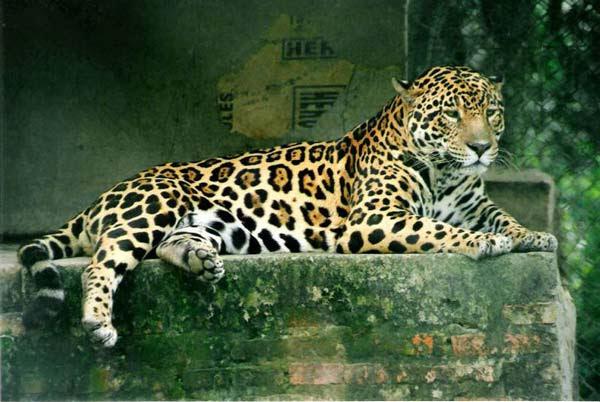 perierga.gr - Κλωνοποίηση ζώων που απειλούνται με εξαφάνιση!