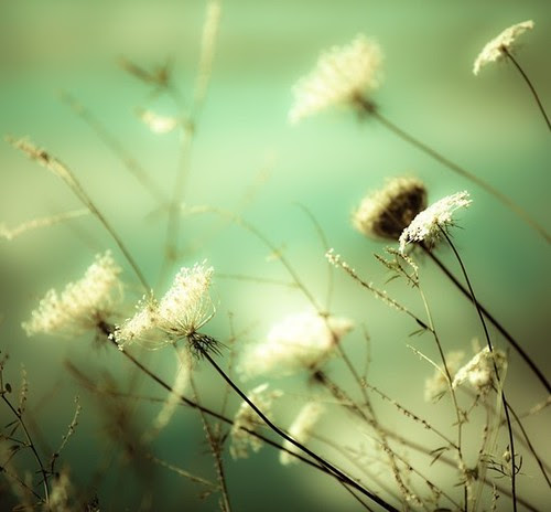 ...porque a semana é verde! by Menina Prendada -
