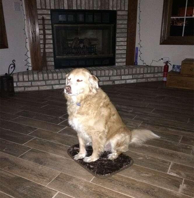 Mulher compra por engano cama minúscula para cachorro e ele finge não se importar com o equívoco