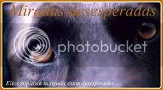 Miradas desesperadas perros adopción