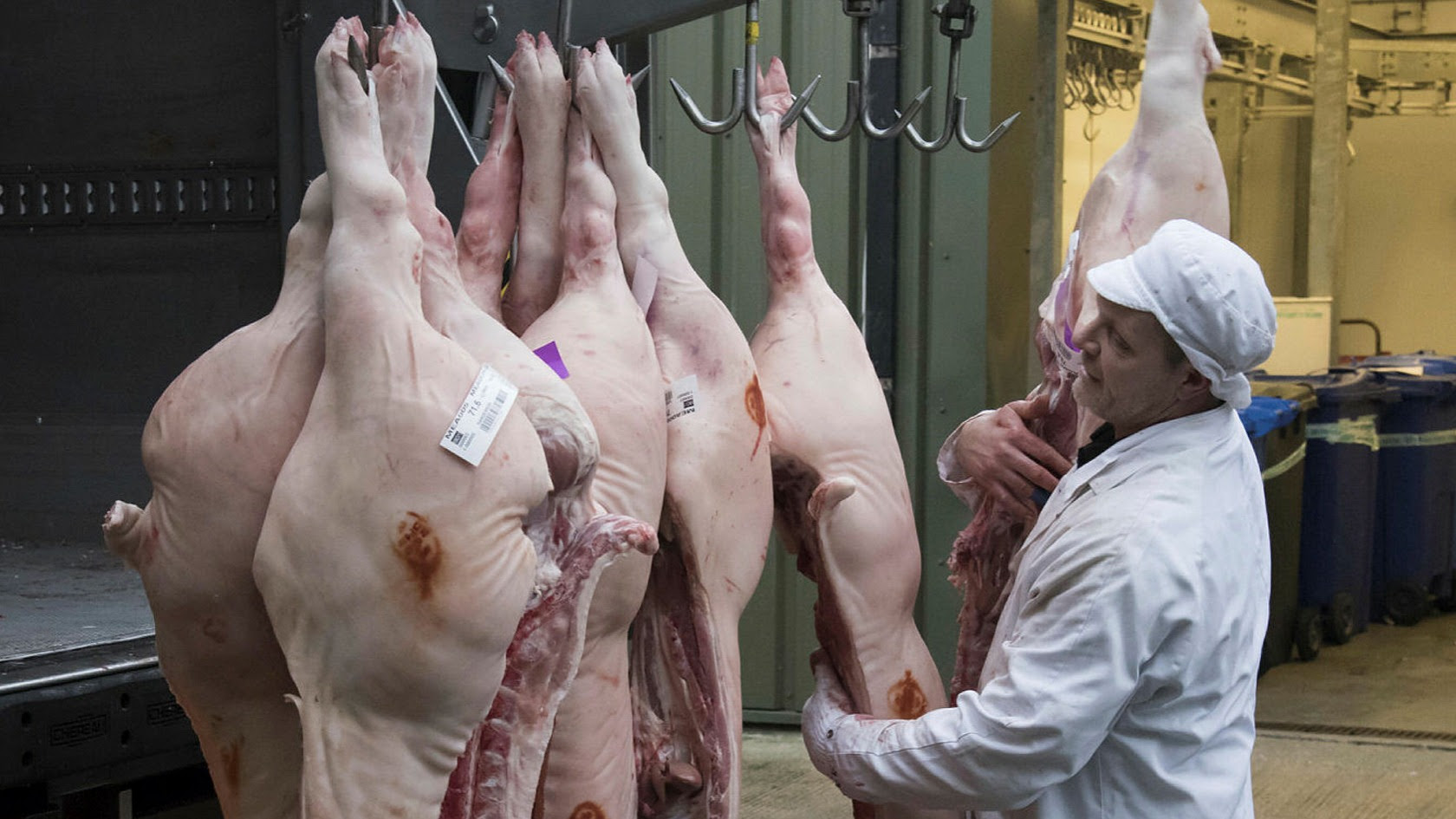 UK to grant visas for 800 foreign butchers to prevent mass pig cull