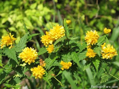 (26-15) April showers brought May flowers - FarmgirlFare.com