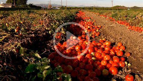 Food Matters: Food Waste   NRDC