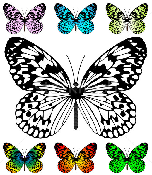 Butterfly vector template with samples. Easy editable wings colo ...