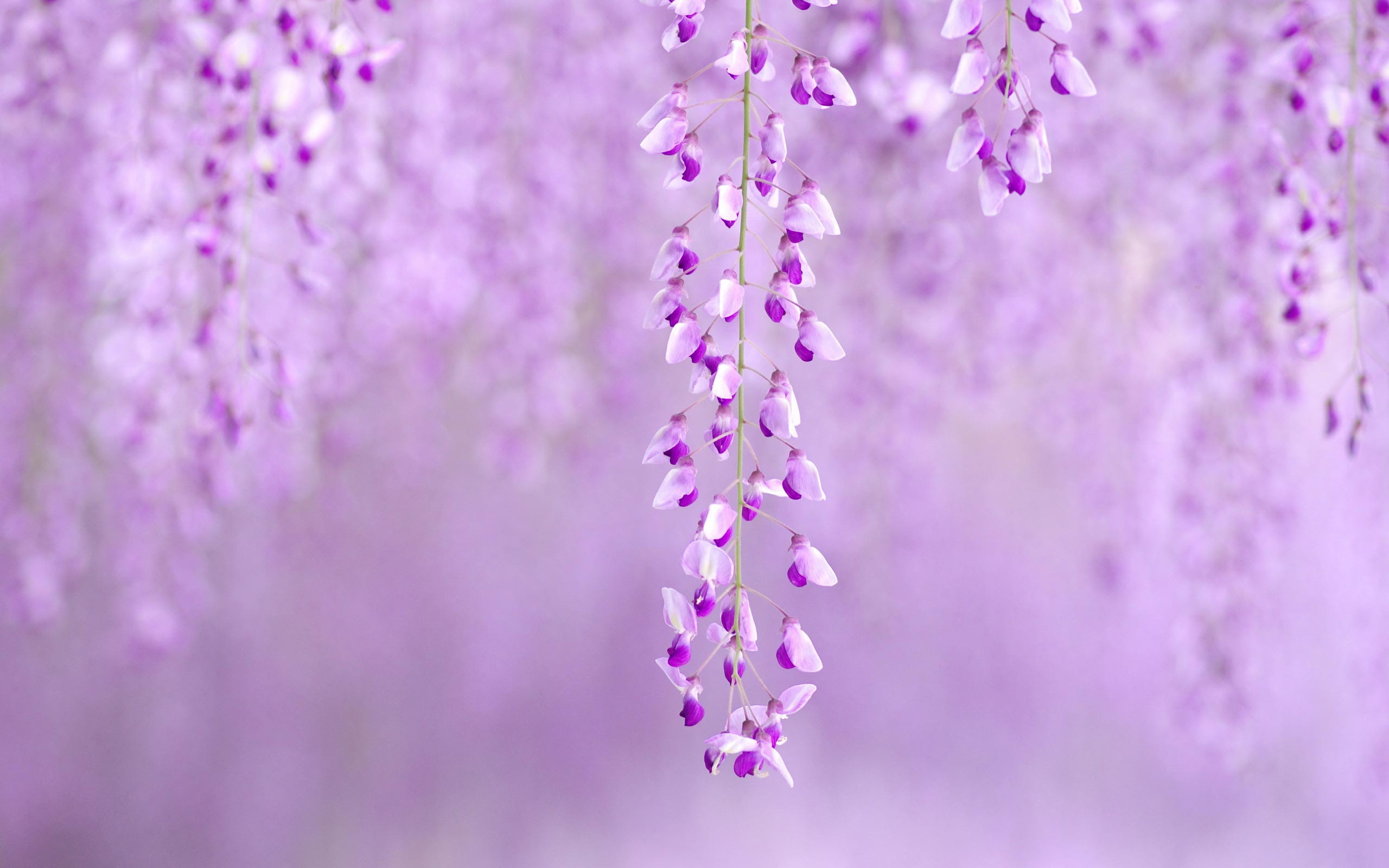 Wallpaper Hd Purple