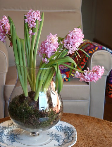 hyacints