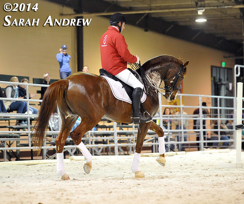 Retired Racehorse Training Project 2014: Stars of the Thoroughbred Makeover at the Maryland Horse World Expo