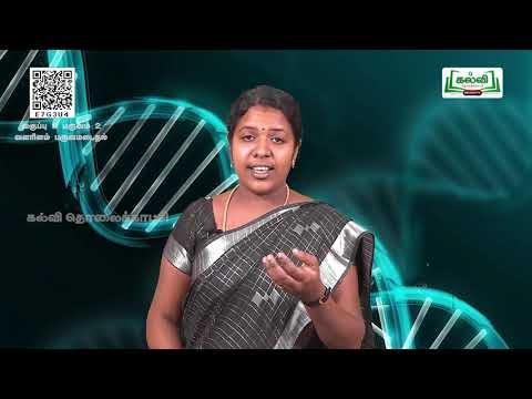 8th Science வளரிளம் பருவமடைதல் அலகு 20 பகுதி 3 Kalvi TV