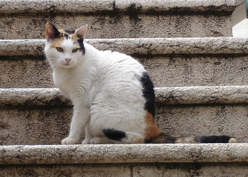 Calico sits on stairs