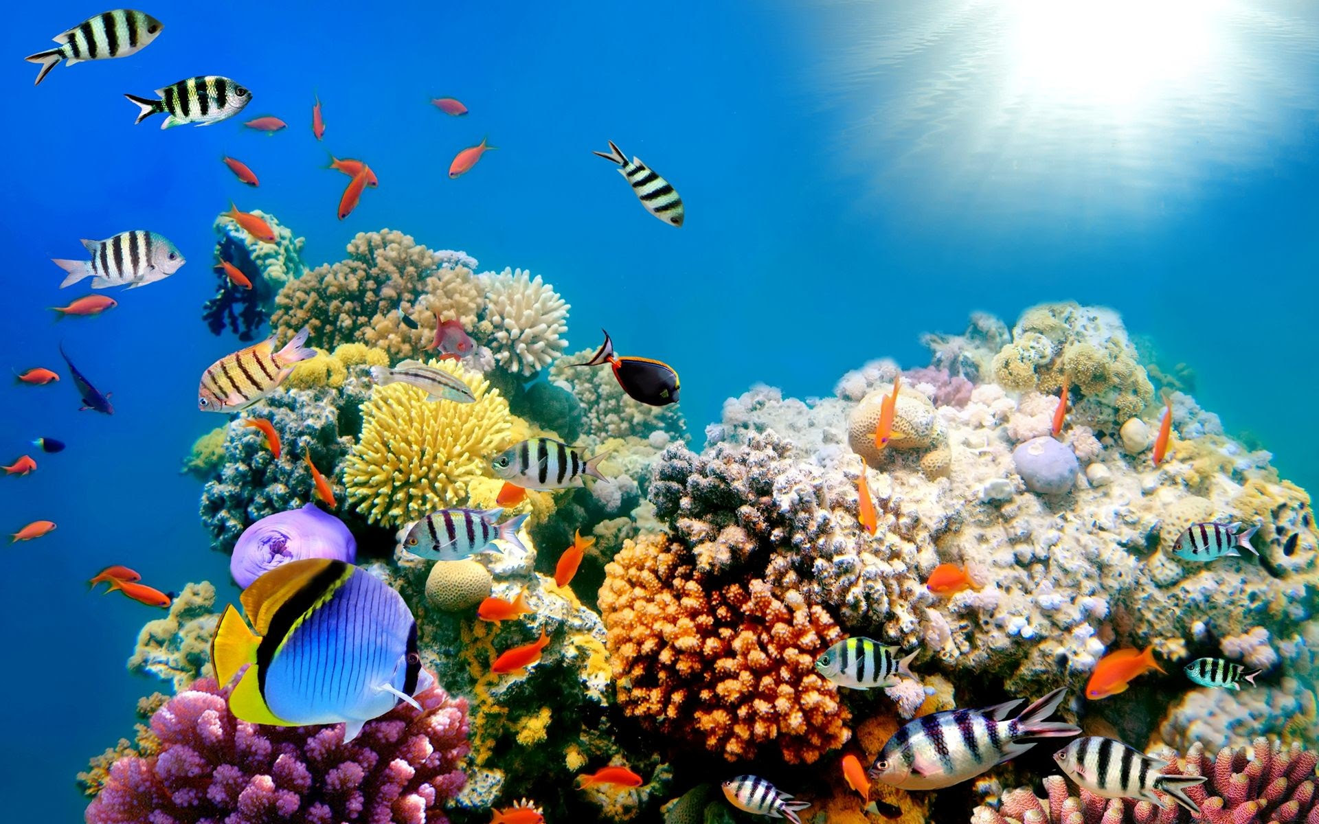 Fish Wallpapers (52+ images)