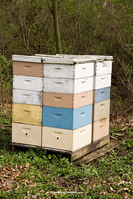 Bee Hives in Early Spring, Green County, Wisconsin