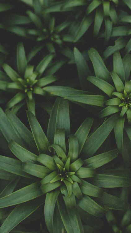 green leaf wallpaper tumblr
