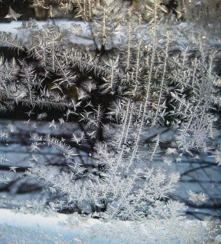 2010, Töölö iceflowers