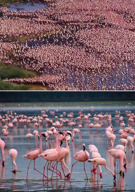 Parque Nacional de Nakuru, no Quênia