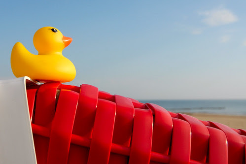 the little duck was on vacation at the sea