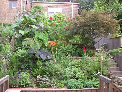 Lower garden late July