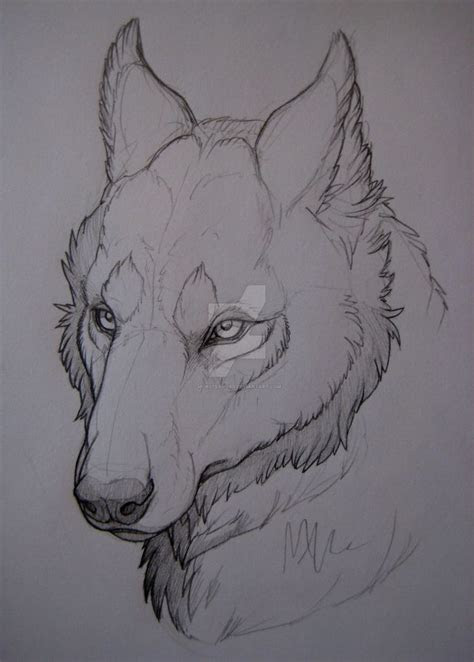 wolf head study  monstermyrrdeviantartcom