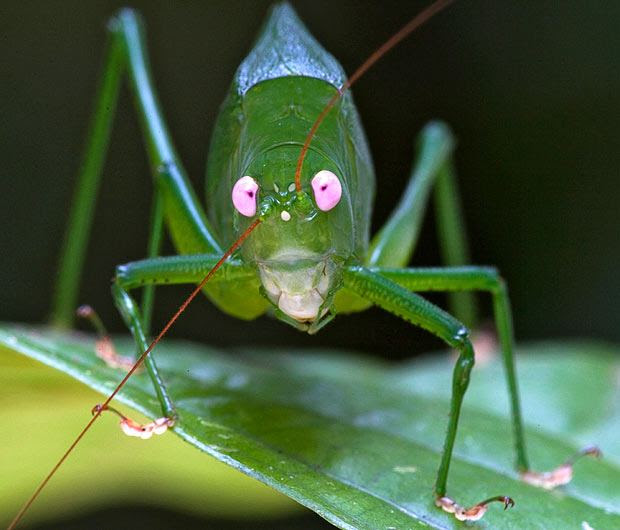 The most unusual animal photos Release The Telegraph