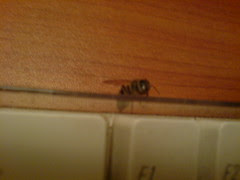 A bee on my keyboard