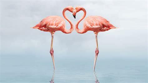 Flamingo Full Hd Wallpapers 1080p : Wallpapers13.com