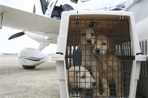 A Paw And A Prayer Us Pilots Save Shelter Animals Health Pet