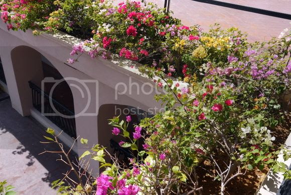 photo P1120728_zps023e8538.jpg