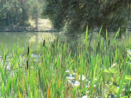 le lac de thorenc.jpg