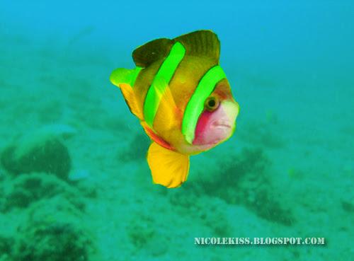 edited clown fish
