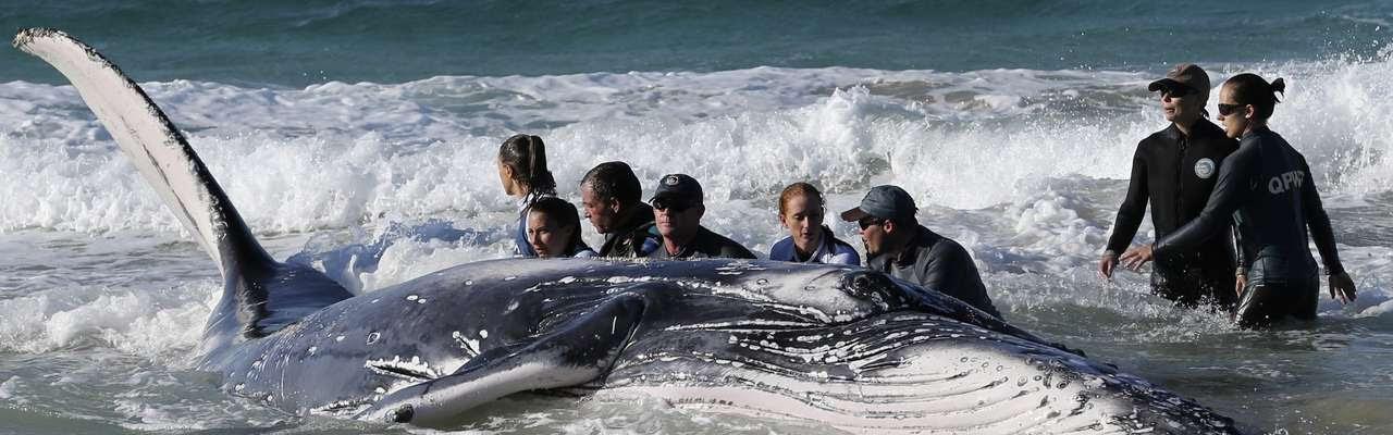 Animal foi libertado depois de várias tentativas Foto: Jason O'Brien / Reuters