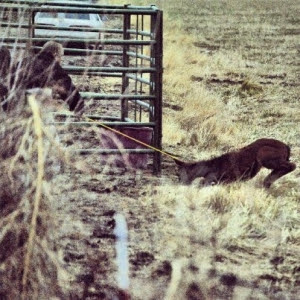 12-6-12_dept_of_ag_manhandling_a_3_week_old_foal