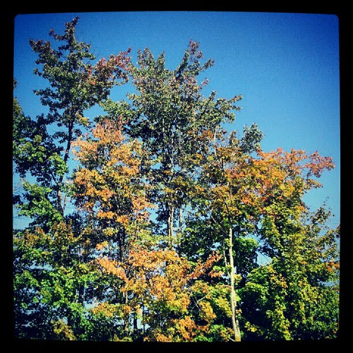 #fall #fooliage starting already in #newhampshire makes me #happy   #tree #sky #leaves #picoftheday