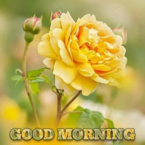 Morning Yellow Flower Pictures Photos And Images For Facebook