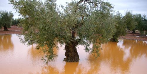 http://www.emartv.es/wp-content/uploads/2013/04/13_04_15_olivar_arriado.jpg