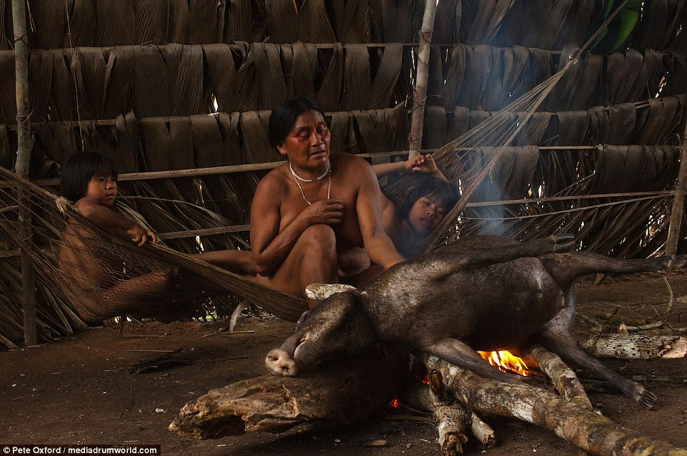As crianças assistem de uma rede enquanto uma mulher Huaorani cozinha um pecarí.  Peccaries são encontrados em toda a América Latina