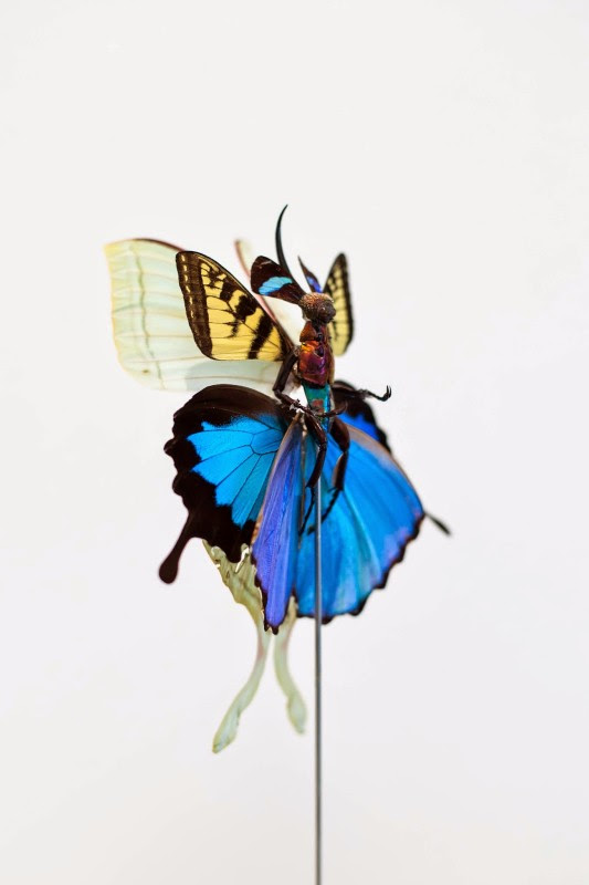 fee insecte graine morceau assemblage 08 533x800 Les fées de Cedric Laquieze