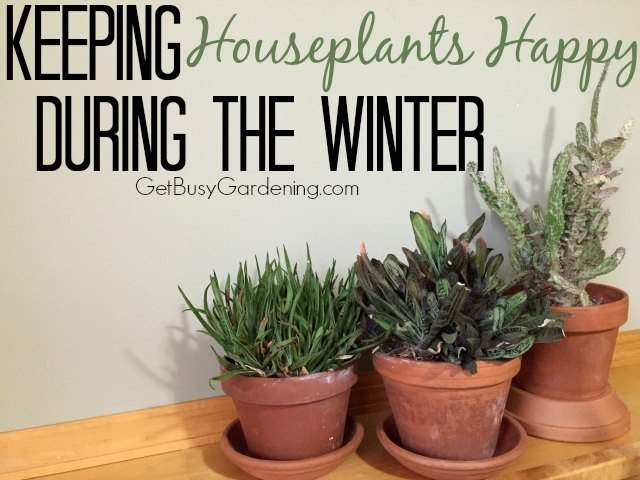 Keeping Houseplants Happy During The Winter - Get Busy Gardening! - HMLP 122 Feature
