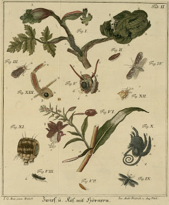 schaeffer insect drawings