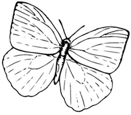 Schmetterling einfach zum Ausmalen - kostenlos