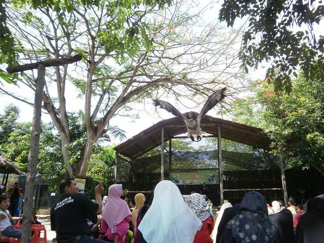 Penang Bird Park 008 (Large)