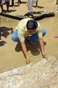Mark in Mexico http://markinmexico.blogspot.com/ Pale Horse Galleries http://palehorsemex.vstore.ca/ Acapulco Mayor Salgado at Caletilla beach washes his face in storm sewer stream to demonstrate safety of water. The water which had been judged as having high levels of fecal coliform contamination was not this water, but rather was water at the beach which was contaminated by raw sewage from a local market.