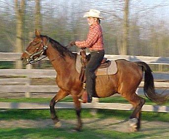 Cowboy Bobs Home Spread Horse Riding And Horsemanship Tips